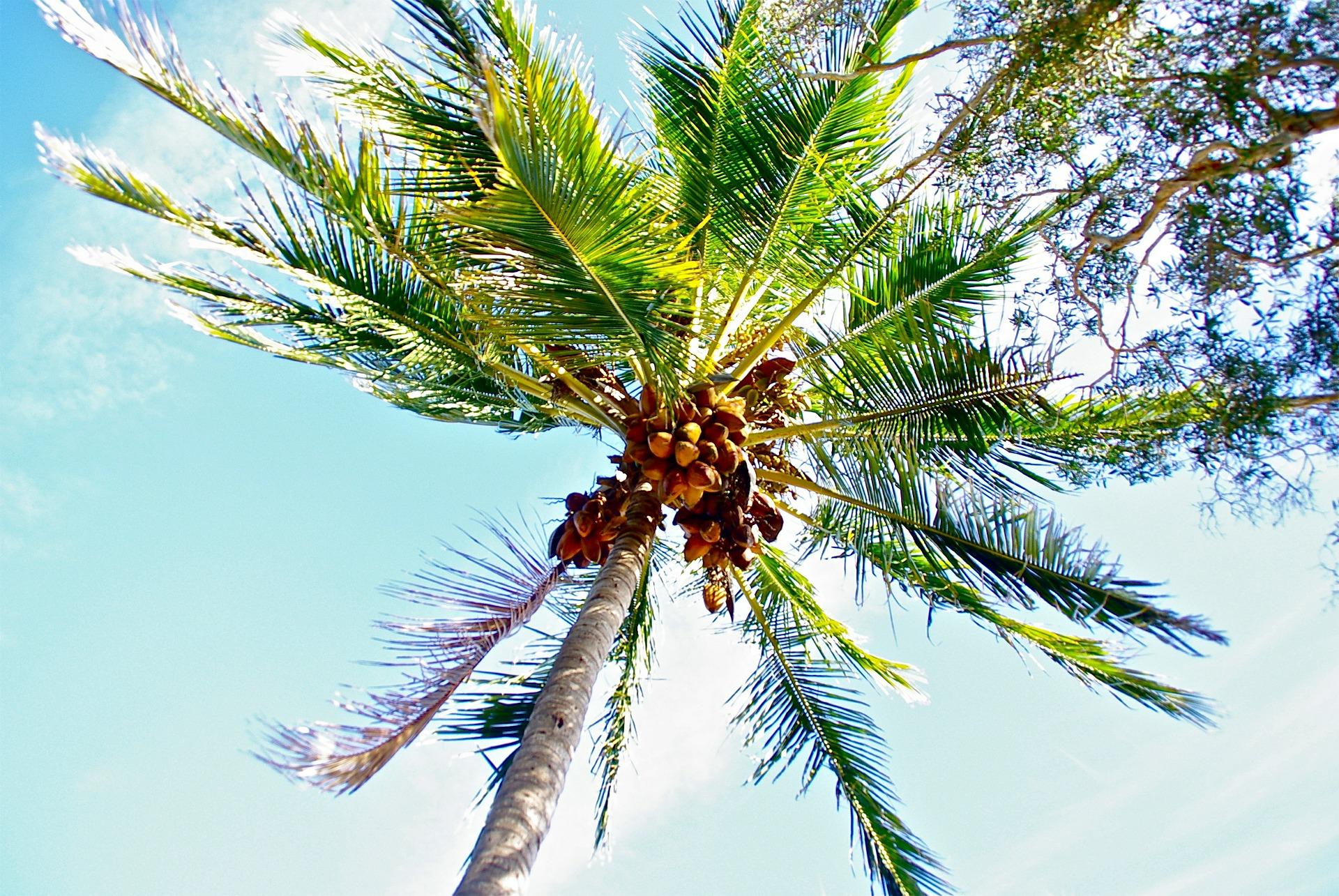 coconut-389043_1920