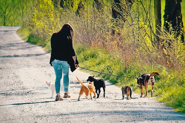 """Ein normaler Spaziergang - Tierkommunikation - kohlundkarma im Interview mit """"Für Tiere sprechen"""""""