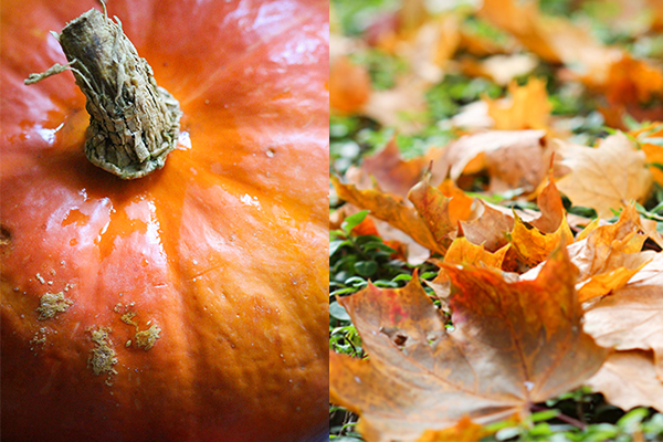 Herbstbild und Kürbis - die perfekte Kombination