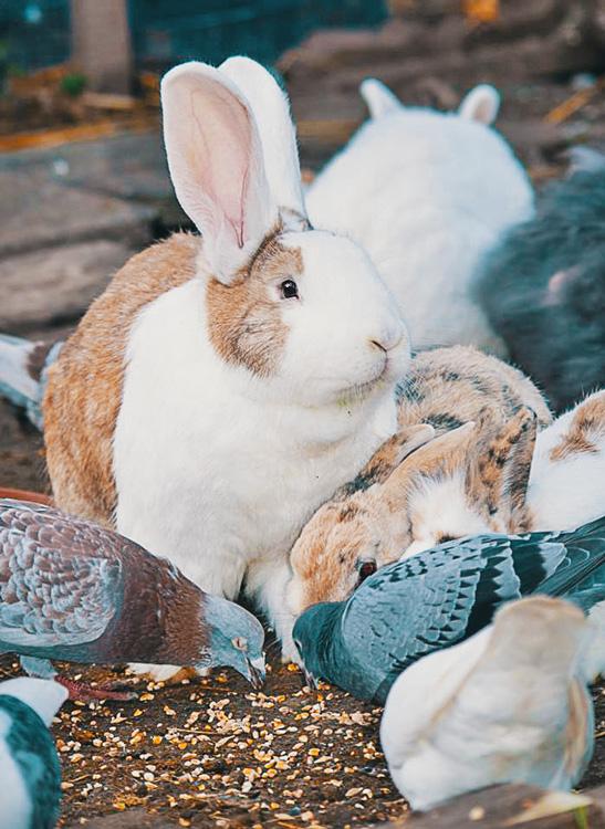 """gemeinsam futtern - Tierkommunikation - kohlundkarma im Interview mit """"Für Tiere sprechen"""""""