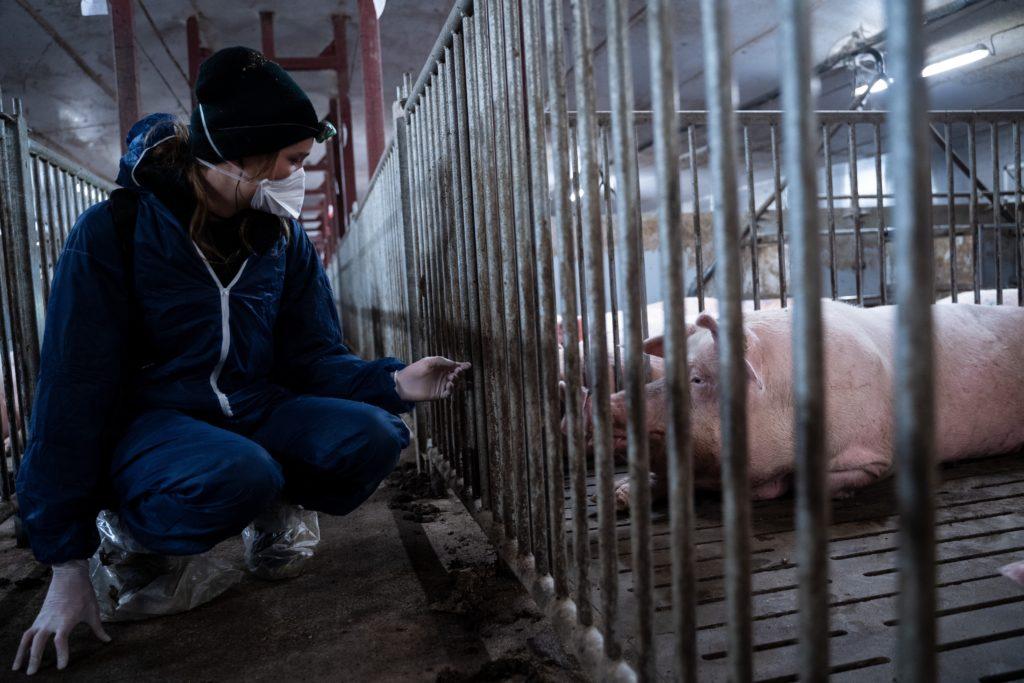 Pia Kraftfutter im Schweinestall