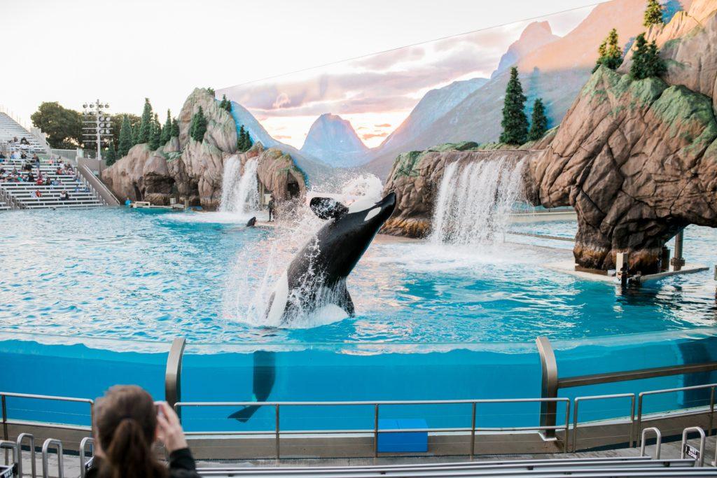 orca_aquarium