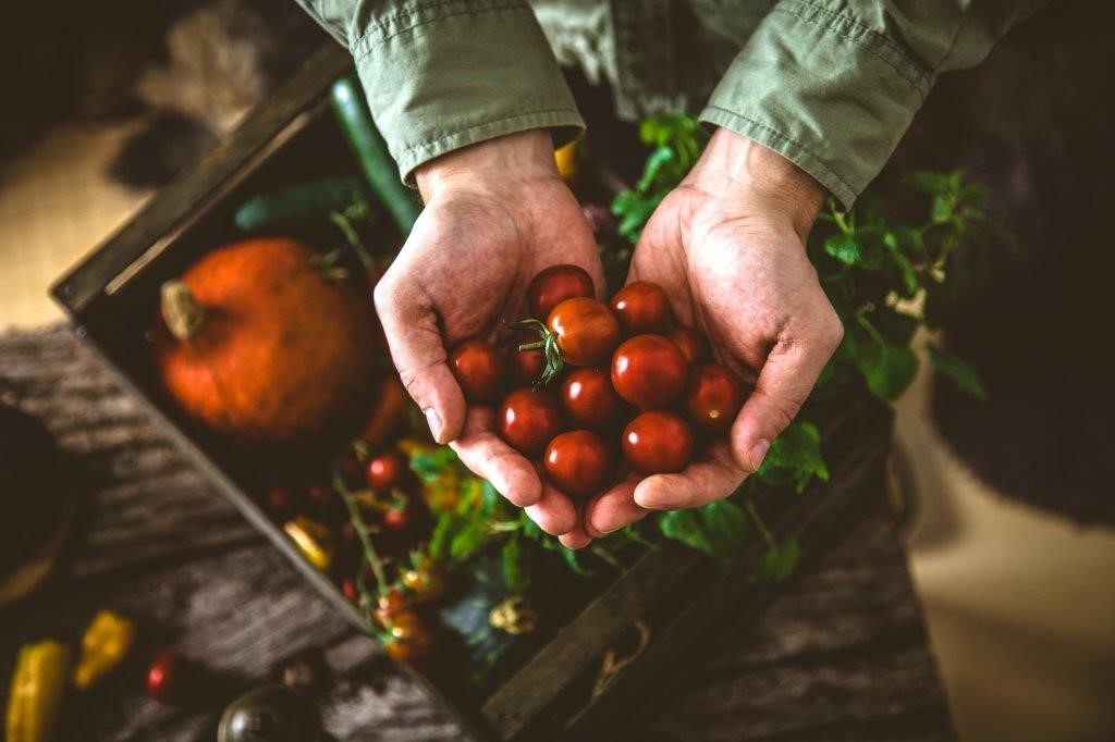 bkk-provita_bio-tomaten