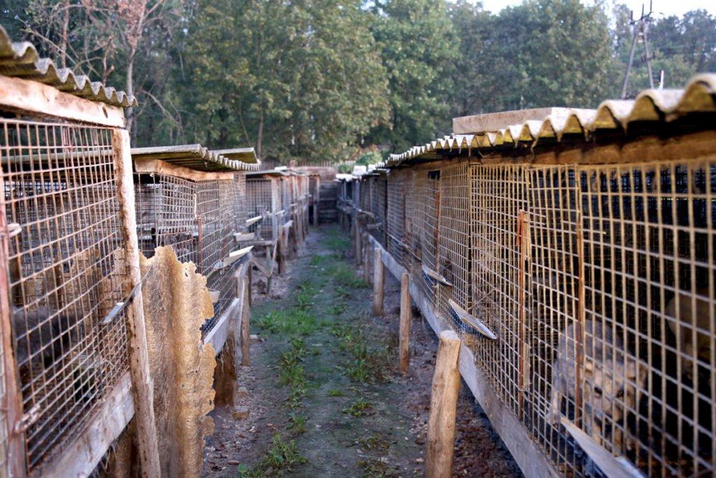 Eine Pelzfarm in Polen Pelzindustrie