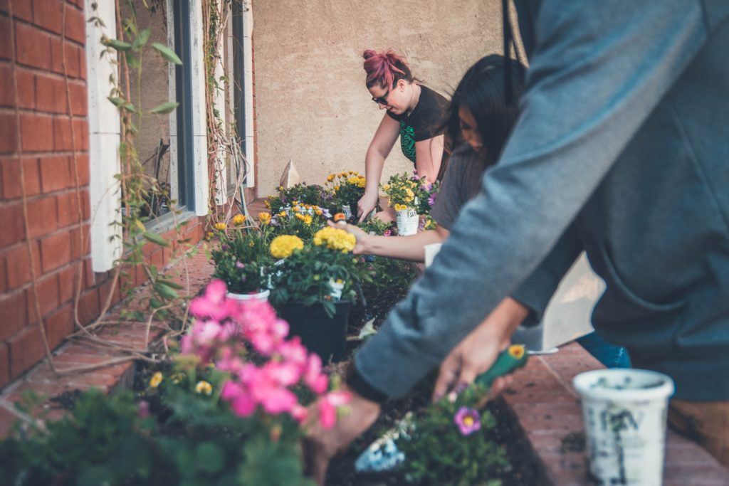 workshop zum pflanzen von blumen