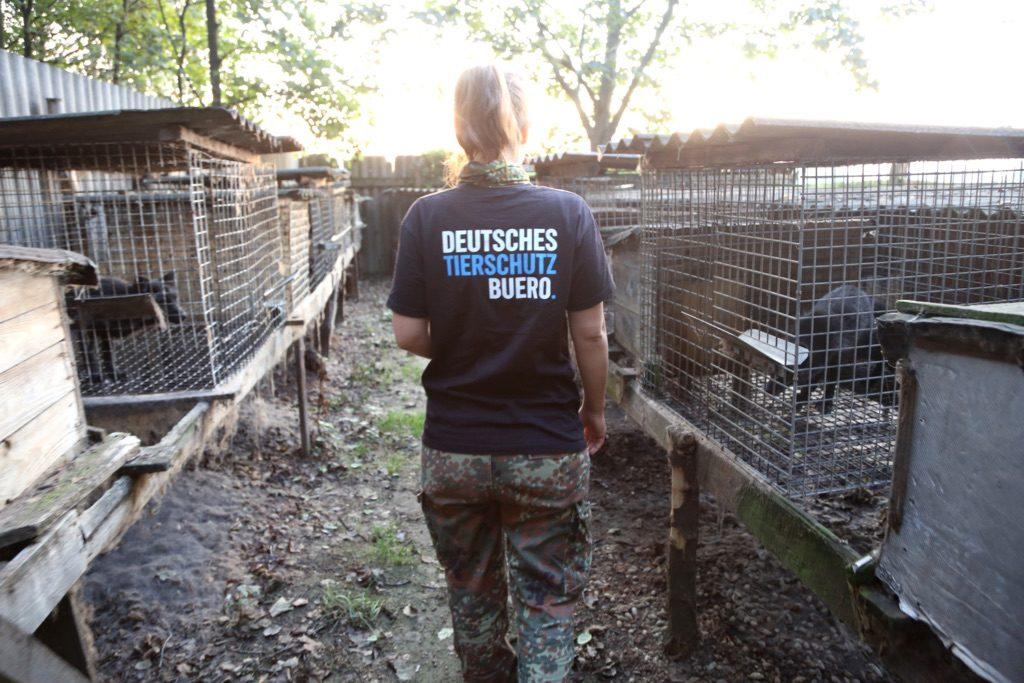 Das Deutsche Tierschutzbüro im Einsatz