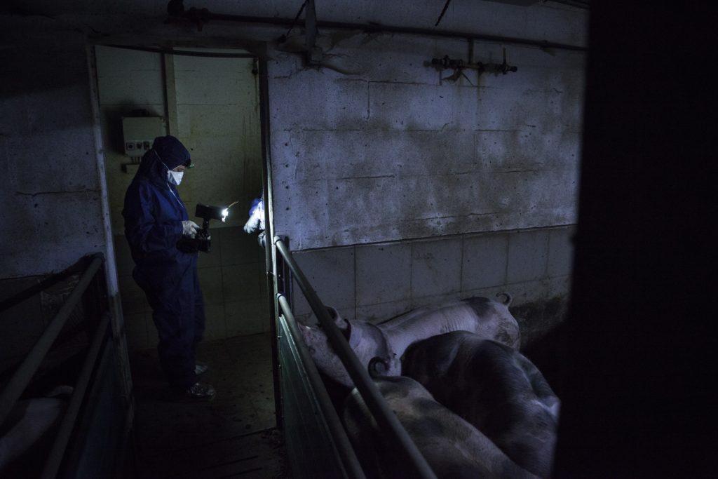 Schweinemast Enthüllungsrecherche Ariwa