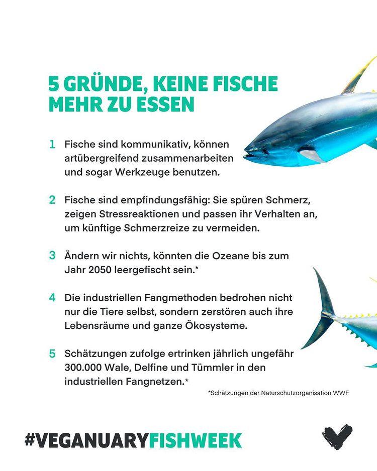 gute gründe keinen Fisch zu essen