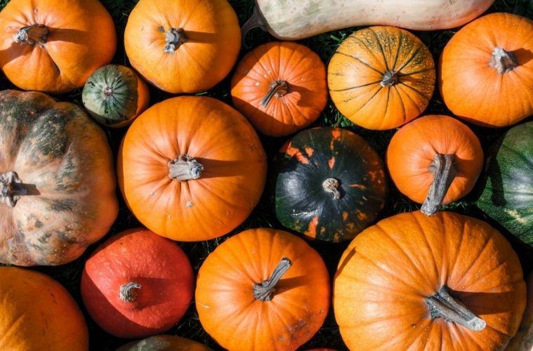 Vegane Gerichte für den Herbst: Lecker Start in die dunkle Jahreszeit